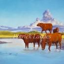 Herd Bulls